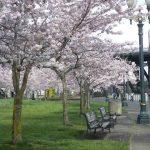 Spring Days in Portland