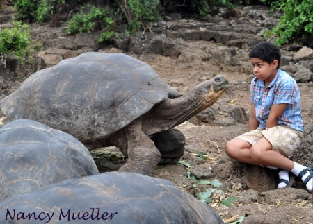 Galapagos Tortoise with Visitor