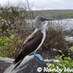 G is for Getaway to the Galápagos Islands