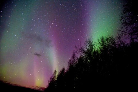 NorthernLightsmmmavocadoflickr (450 x 300)