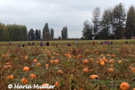 Hunting for Pumpkins on Halloween Eve