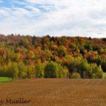 Québec Road Trips: The Ultimate Autumn Getaway