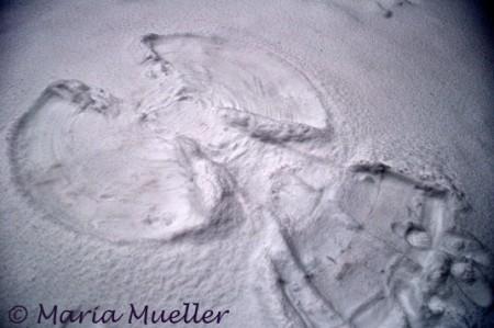 Seattle Snow Angel
