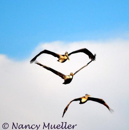 Gulf Shores Gulls