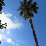 Ojai California: 7 Reasons to Stay and Play