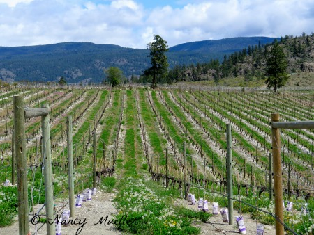 Okanagan B.C. Wine Country