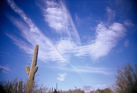 Saguaro sky