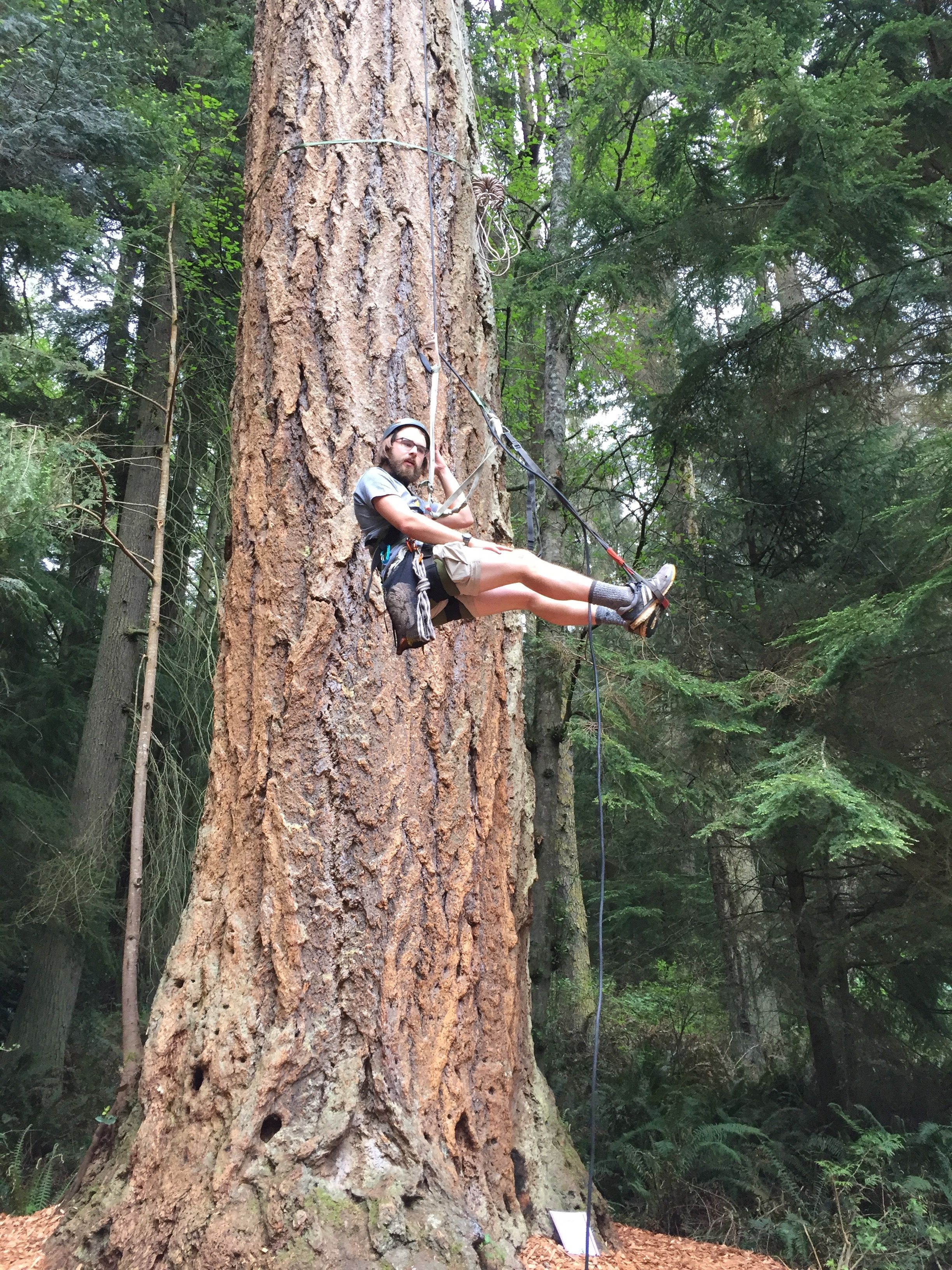 Escape to Camano Island, The Easy Island, tree climbing
